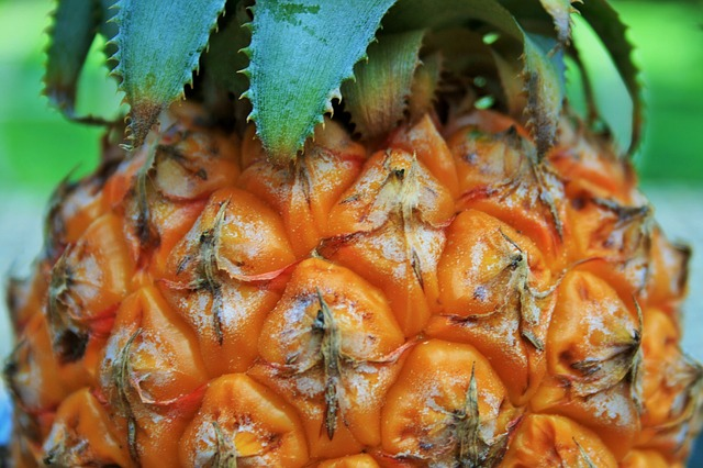 pineapple-316004_640